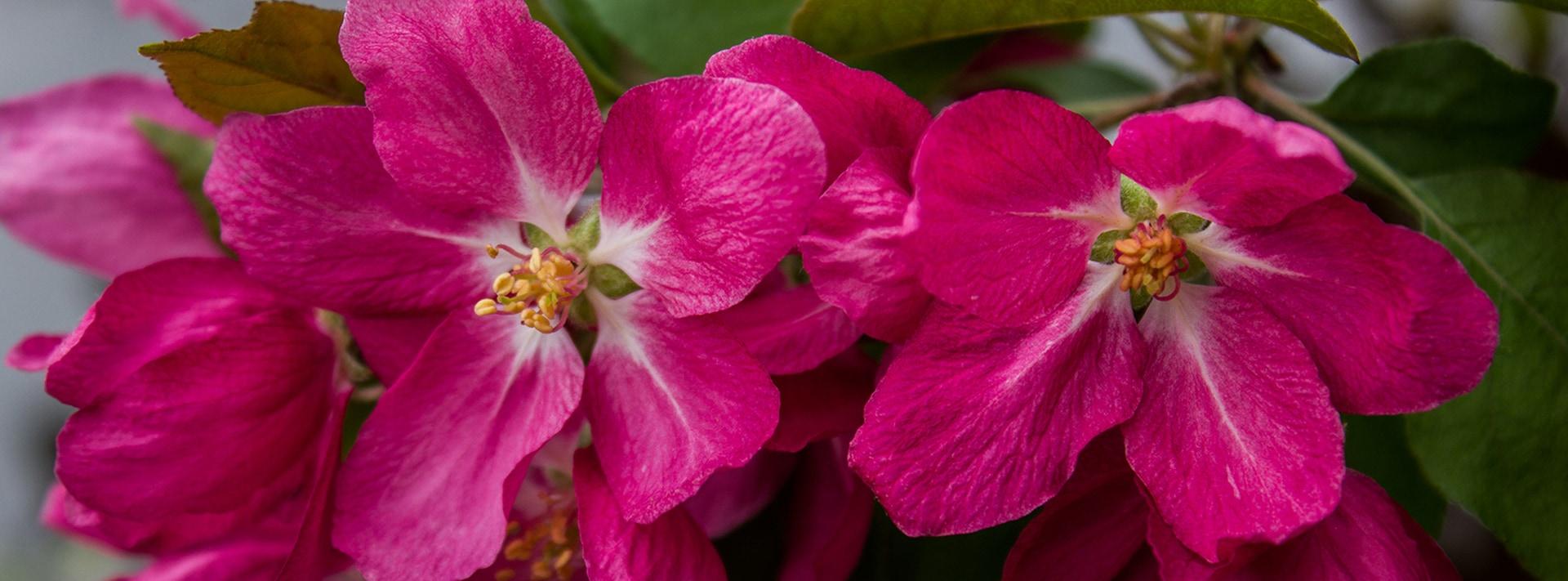 nash-spring-2017-pink_flower